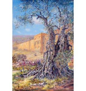 olive tree jerusalem