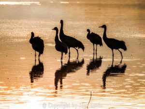 Photo of birds and animals in Israel
