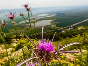 Photo of Israel Nature