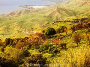 Nature of Israel